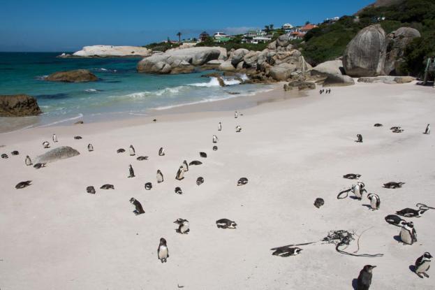 Kapstadt und Umgebung Simons Town