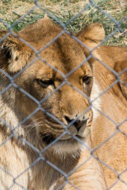 Garden Route Südafrika Sehenswürdigkeiten Tipps Highlights Jukani