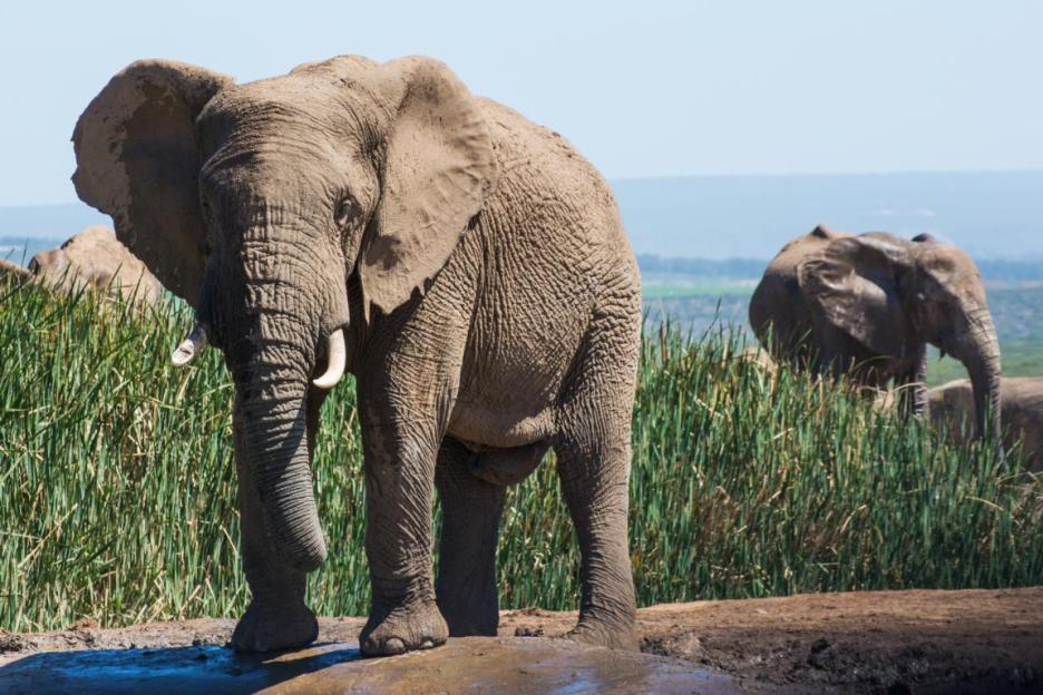 Addo Elephant Nationalpark Elefant Wasserloch