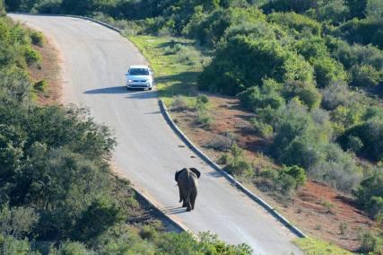 Addo Elephant Nationalpark Selbstfahrer Mietwagen