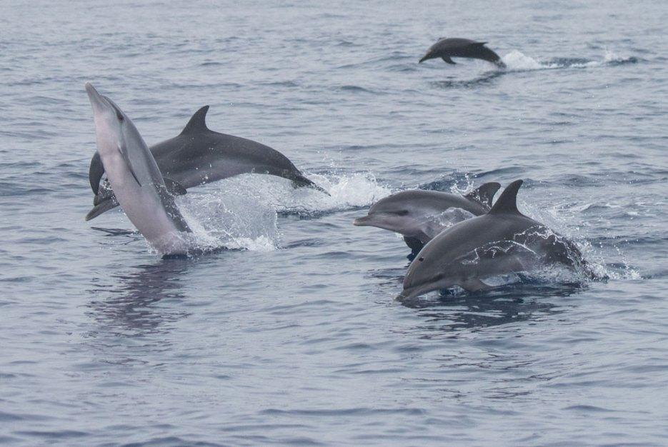 Delfine La Gomera