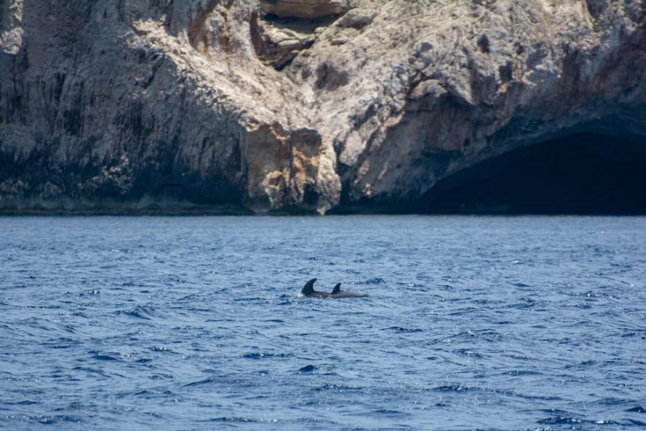 delfine cabrera mallorca