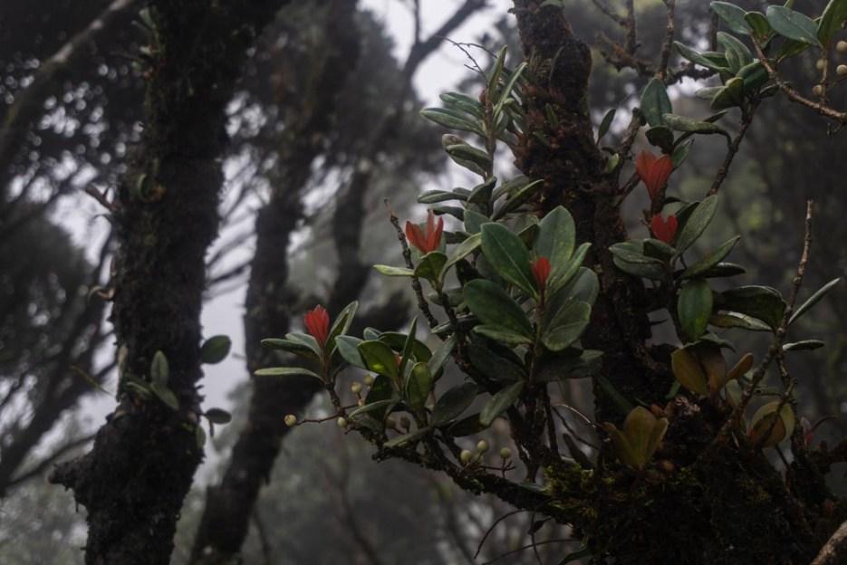 cameron highlands malaysia mossyforest