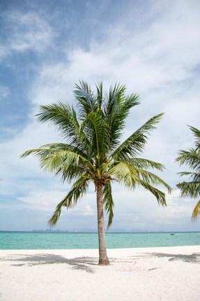 koh lipe strand palme