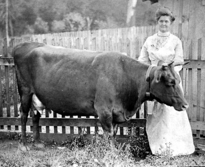 Woman-cow-1900