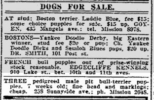 Selling pit-bull puppies. SF Chronicle, 26 July 1914.