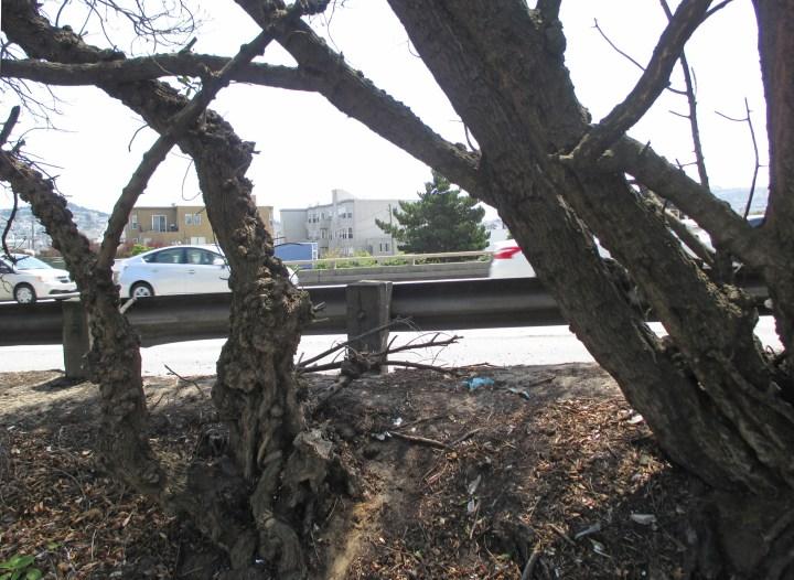 2017-Circular-Ave-I280-freeway-s
