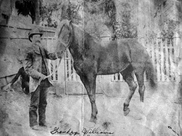 1905c. Early Sunnyside resident Seph Williams stands with his horsein front of his house at 257 Joost Ave. Courtesy the Williams family.