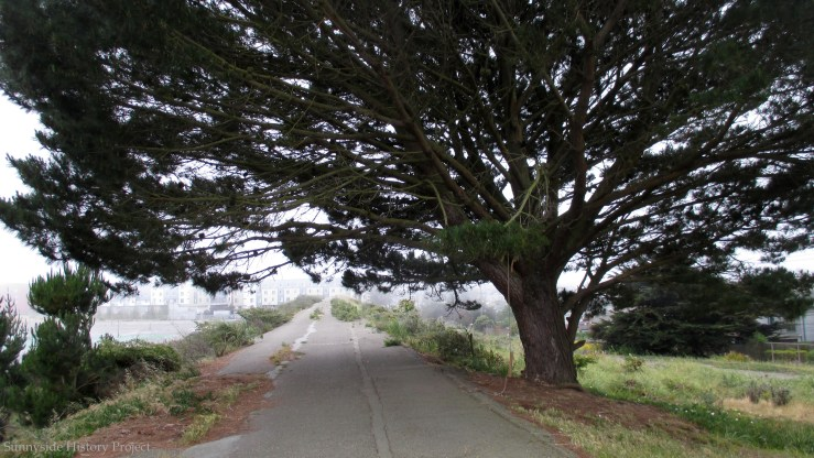 The north tree. Balboa Reservoir, May 2020. Sunnyside History Project. Photo: Amy O'Hair