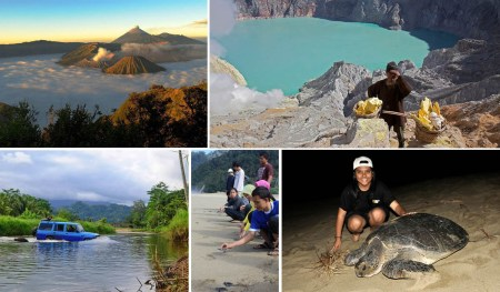 mount bromo ijen sukamade turtle beach tour