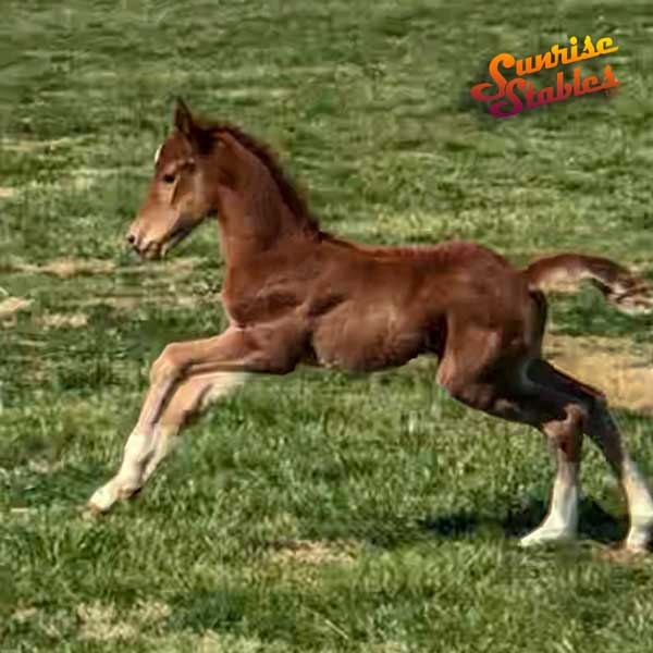 2019 colt out of Playmors Hearts And Tarts