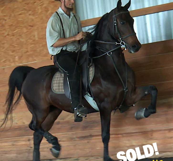 Fall sales are brisk at Sunrise Stables!