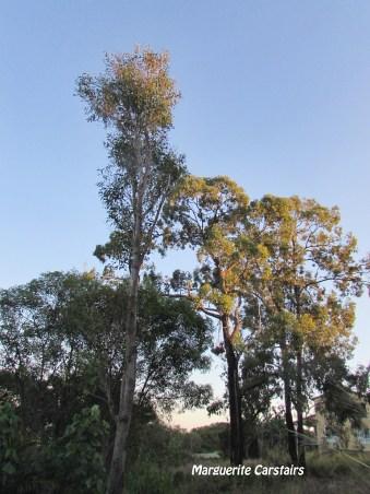 trees-cut-down-2