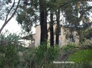 trees-cut-down