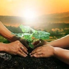 plant growing - Fort Myers - Sunset Air and Home Services