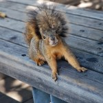 201405_SquirrelWhatsNew