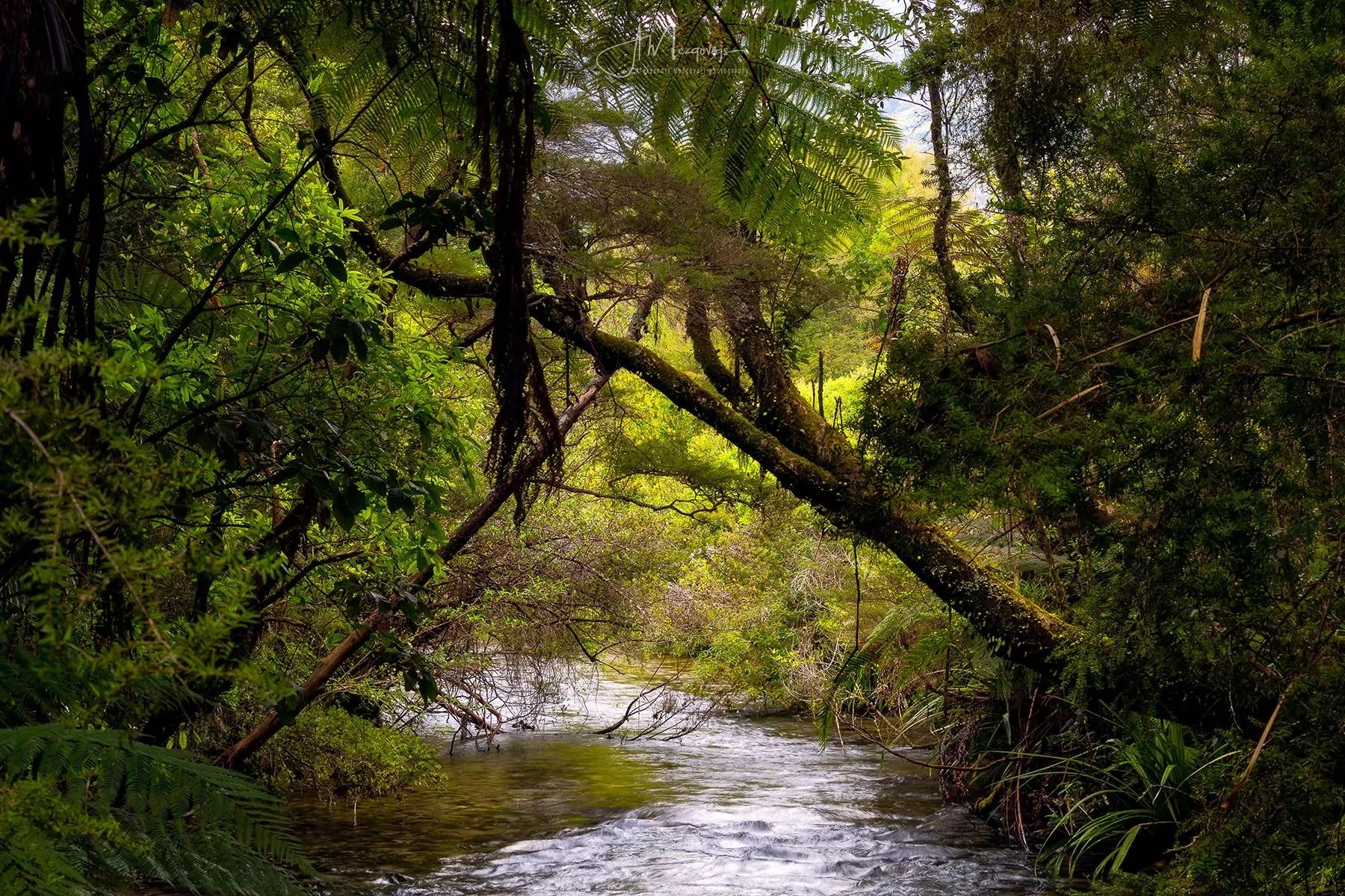 Grove Scenic Reserve feels like a real jungle