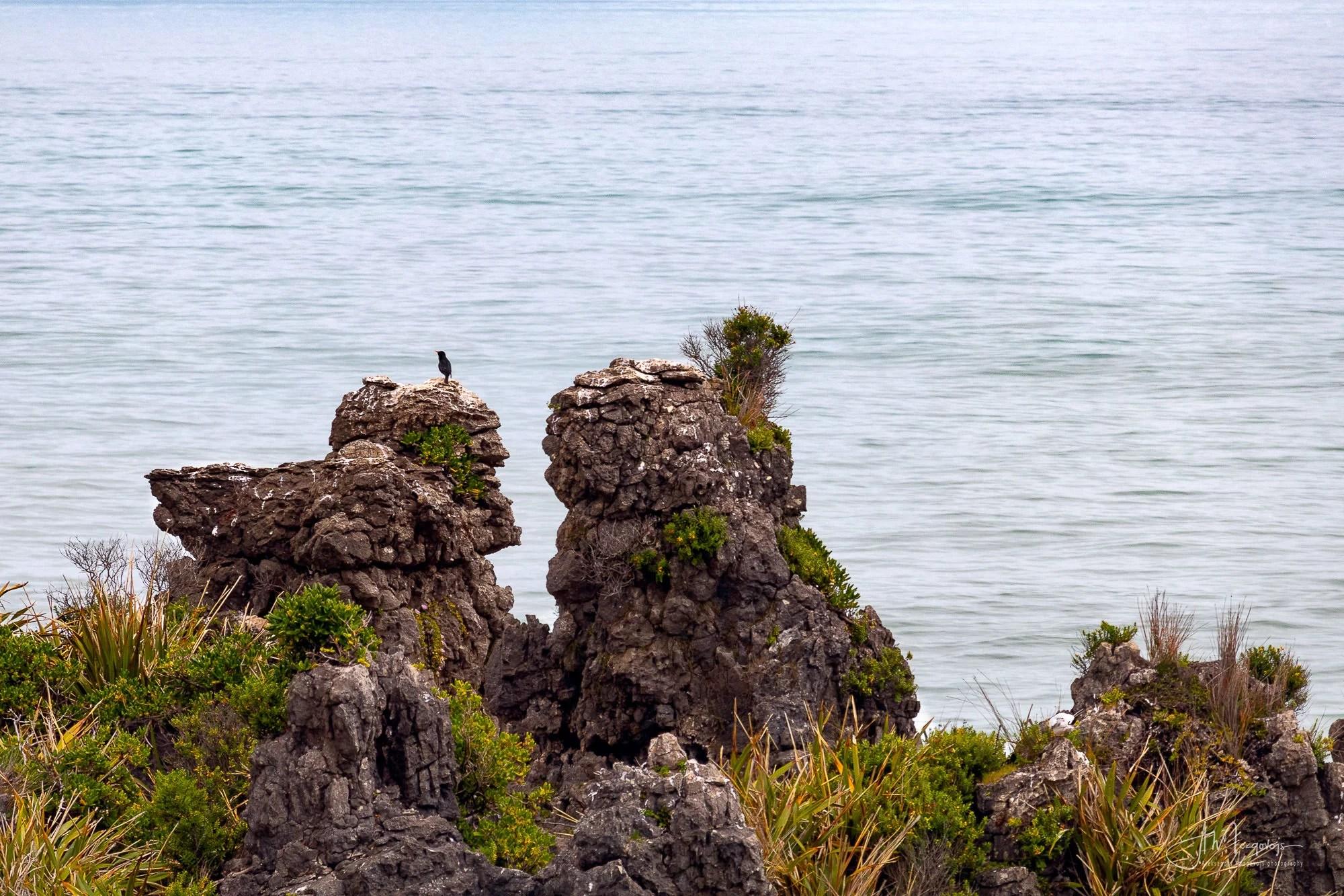 Lonely Bird at Pancake Rocks