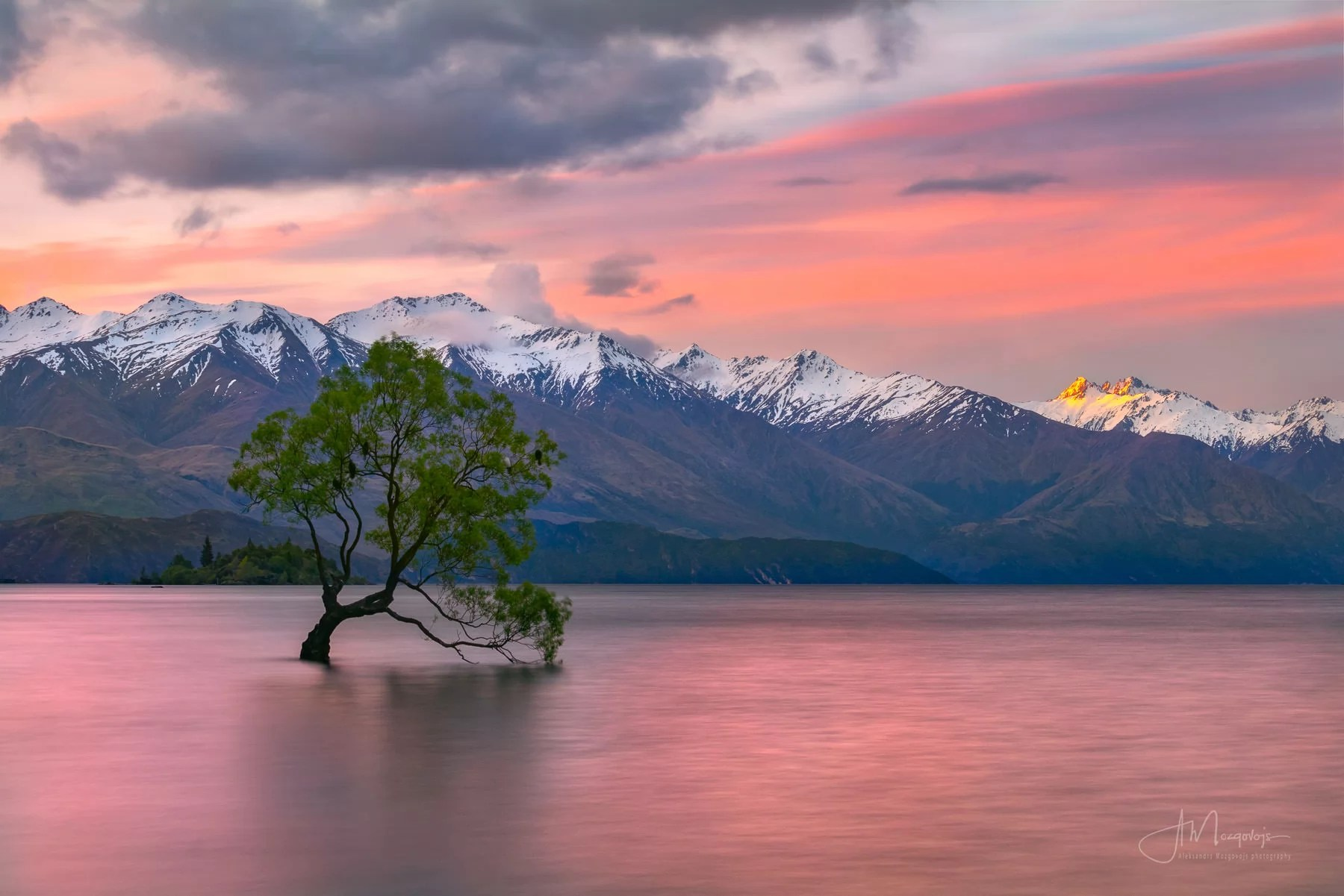 Wanaka Tree at sunset, New Zealand