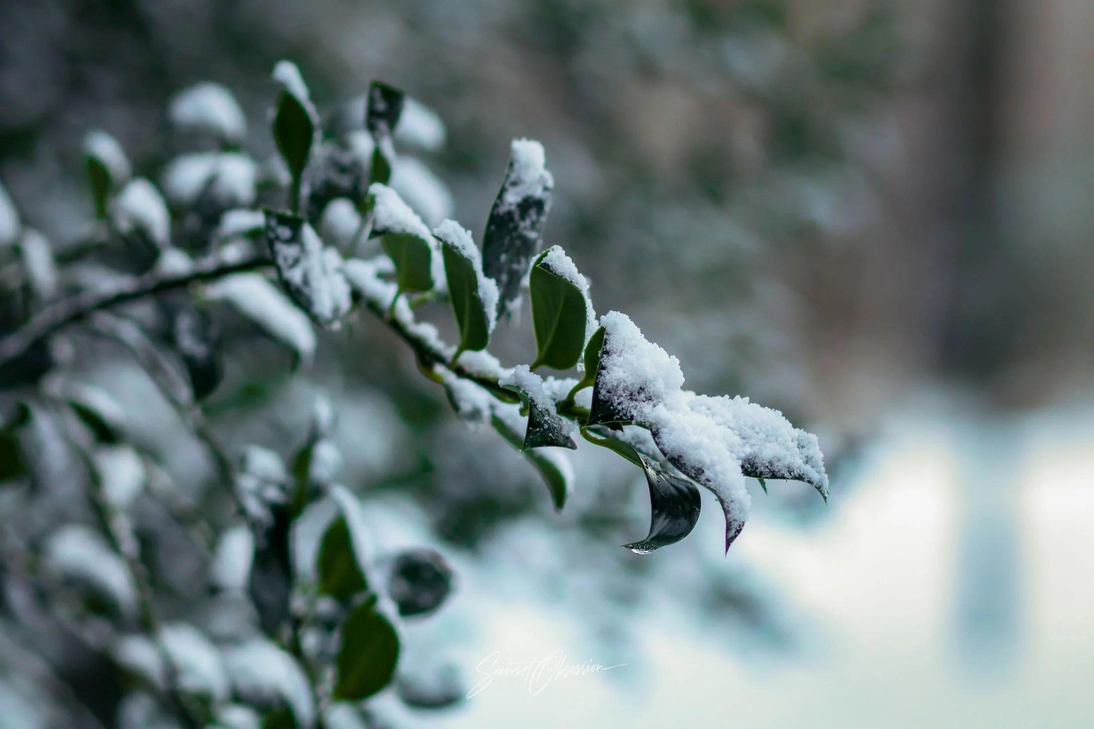 Зимняя фотография хороша тем, что зимой даже совершенно обыденные вещи выглядят сказочно и волшебно