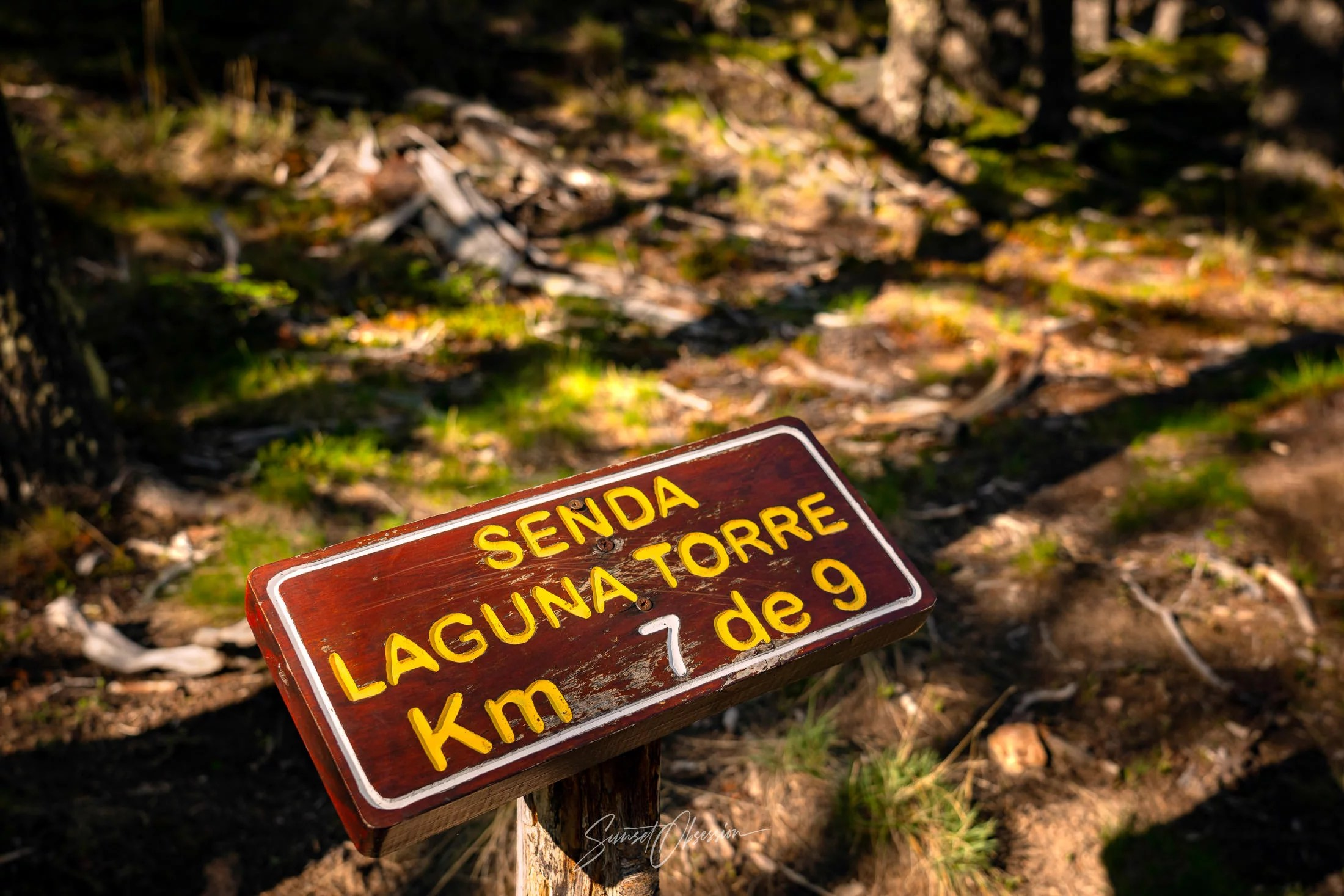 The route to Laguna Torre is well-marked