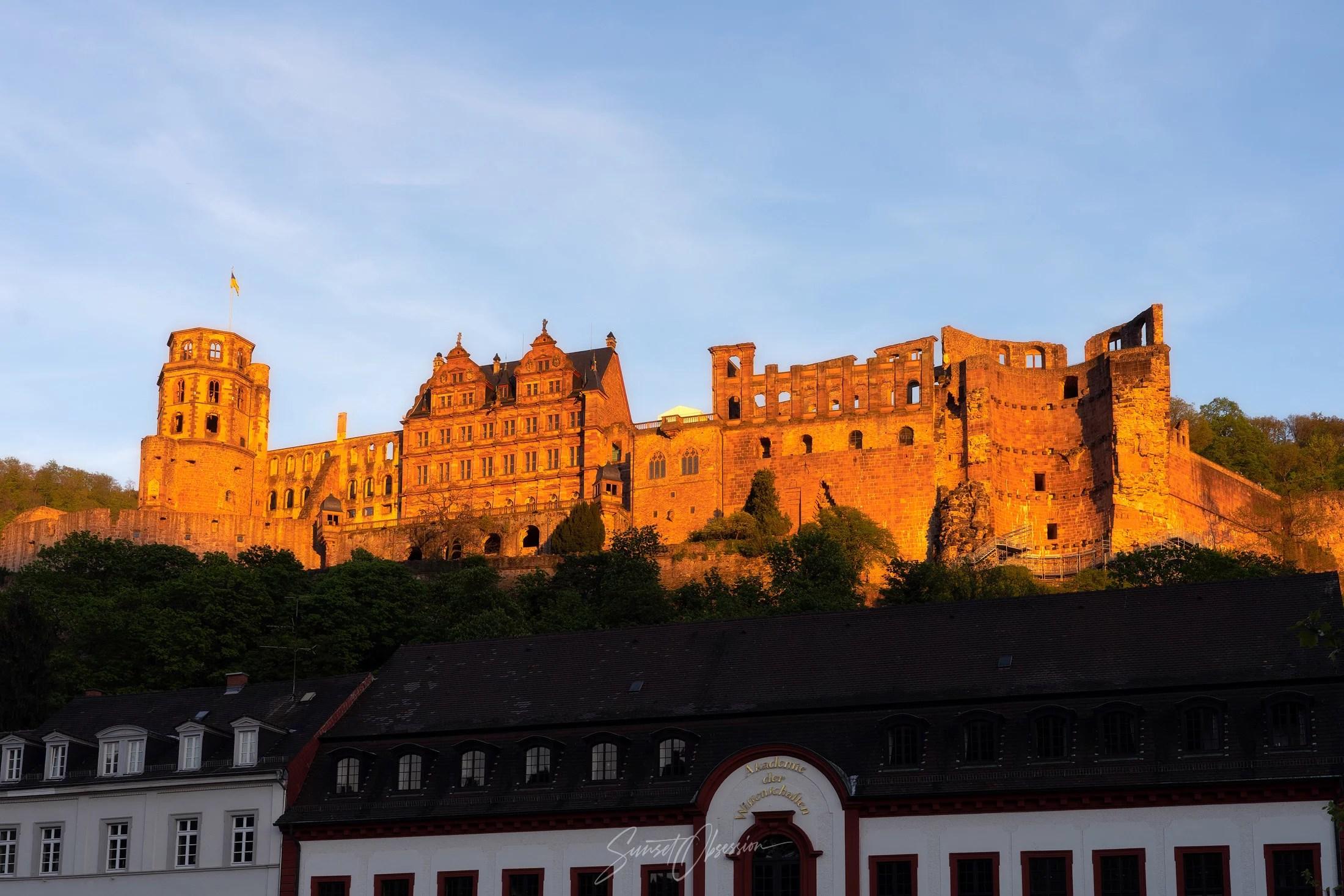 Privacy | Heidelberg Engineering