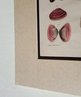 framing_shell_cu_web