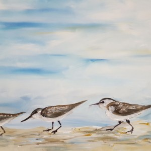 pnp_shorebirds
