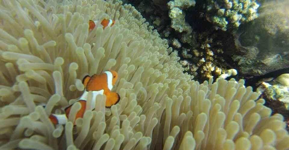 Finding Nemo in Lovina, Bali