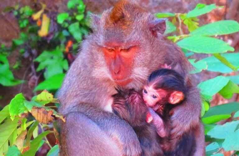 Monkeys holding babies