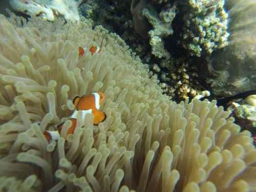 Snorkelling in Nusa Lembongan