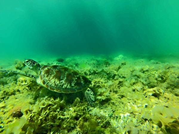 Turtles and Sardines in Moalboal Philippines