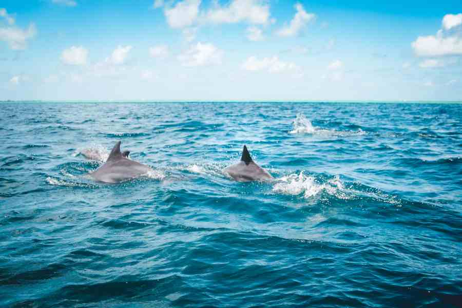20 Unmissable Things To Do On São Miguel Island, Azores - Sao Miguel Whale Watching