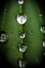 Green Droplets