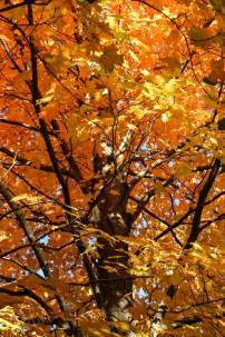 Fall-10