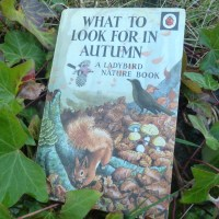What to look for in Autumn ~ A Ladybird Nature book.