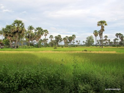 Rice, palm trees and hill flash past in the Cambodian countryside.