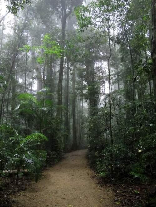 Talking an early morning walk through the rainforest