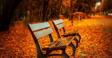 fall seasonal affective disorder