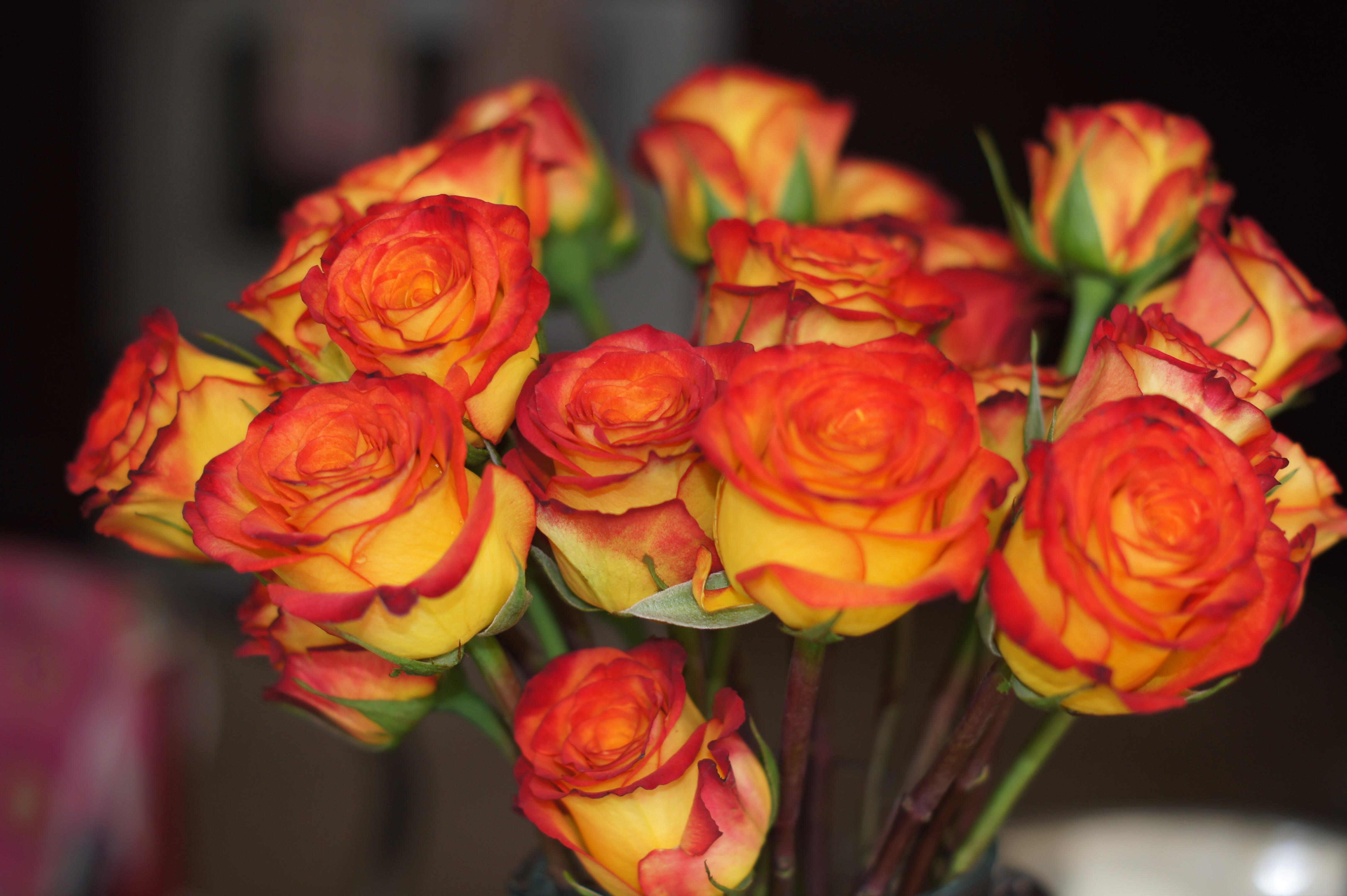 50 roses $50, 365 days. Just Fresh Roses.