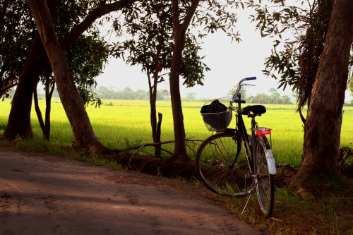 Bike and Rice Fields