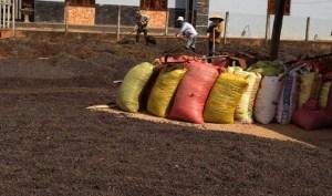 Dalat_Coffee Drying