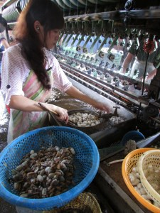 Dalat_Silk Worms_Extracting Worms & Spinning