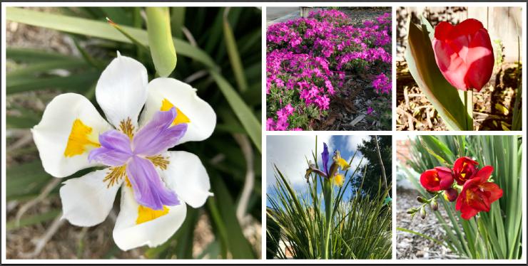 Sacramento, Spring