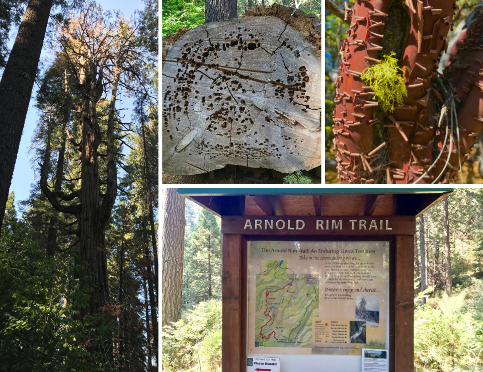 Arnold Rim Trail Photos