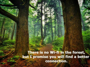 nowififorest