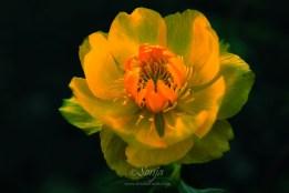 Yellow 7365Edit 2012.05.06Blog