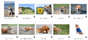 写真AC犬