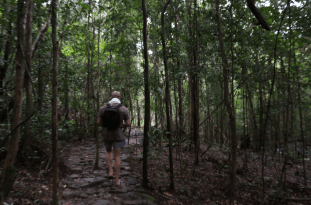 Dan walking through the trees, thin trunks, lush green, wet ground as it has just been raining