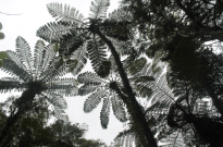 Looking up into the grey sky, big green ferns making a nice pattern
